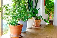 ⽔槽や観葉植物